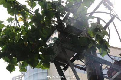 """雁江供电公司修理10kV中晶二线上树枝,变身""""伐木工"""""""