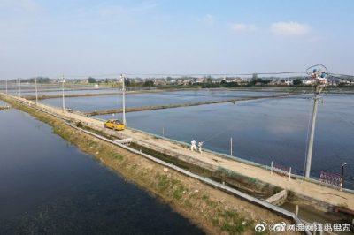 涟水县金绿园水产养殖场架设10千伏线路